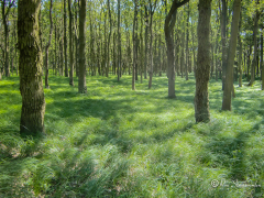 groen-tapijt-bos