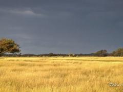 het-grote-veld