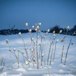 Winter in de Duinen De Zilk