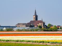 bollenvelden-kerk-de-zilk