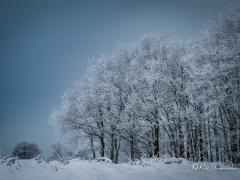 bos-in-sneeuw