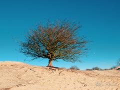 meidoorn-zand